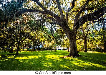 Large oak trees and spanish moss in Forsyth Park, Savannah, Geor