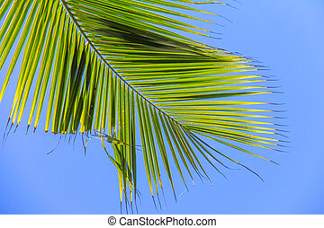 Large palm leaf on background blue sky