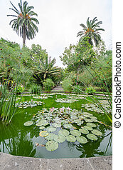 large palms in a park, pond in the foreground