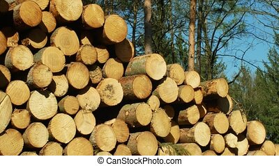 Large piles of cut tree trunks, round logs. Spruce forests...