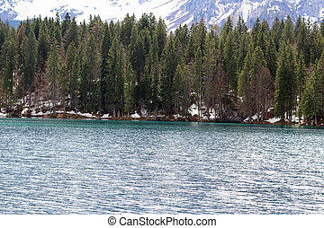 large pine trees on the shores of Alpine Lake with the Alps in the background 2