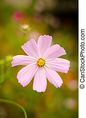 Large pink flowers on a green background