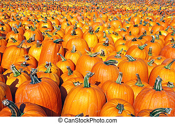 Large pumpkin patch background