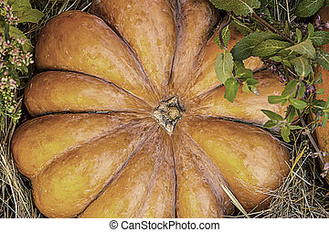 large ribbed pumpkin top view on hay closeup background