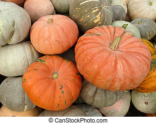 Large ripe pumpkin lying on the grass