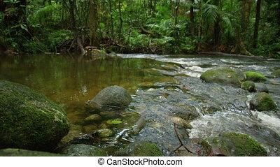 large, rivière, coup, jungle