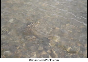 Large rocks drop into a calmly flowing river shore creating large splashes