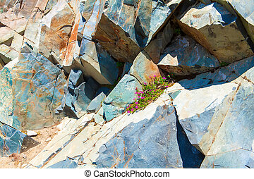 Large rocks in Mount Rainier National Park