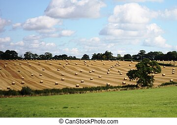 large round bales in rural farmland
