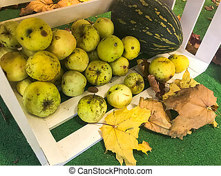Large round juicy ripe green apples in a wooden box scattered on the floor and dry fallen yellow fallen leaves