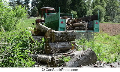 large sawn logs worker - forester working in the wood pile...