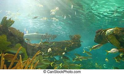 A close view of large schools of fish drift in a sun-drenched coral reef