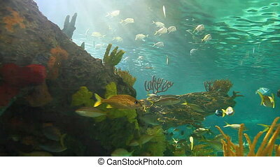 A close view of large schools of fish drifting in a sun-drenched coral reef