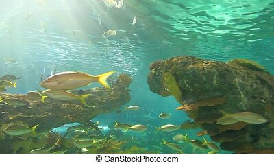 Large school of fish drifting in a sun-drenched coral reef