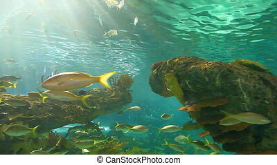 Large schools of fish drifting in a sun-drenched coral reef