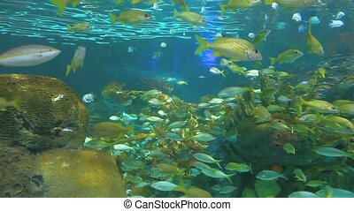 Large schools of fish swimming in a coral reef