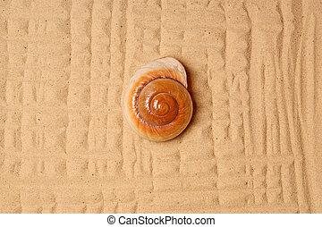Large seashell on the sand, Studio shot