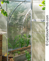Large semicircular polycarbonate greenhouse with an open door. Various plants in a greenhouse with an open door