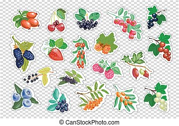 Large set of berries. vector isolated