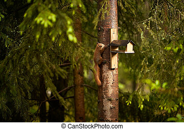 squirrel eats seeds from a bird feeder on a tree