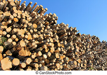 Large Stack of Logs and Blue Sky