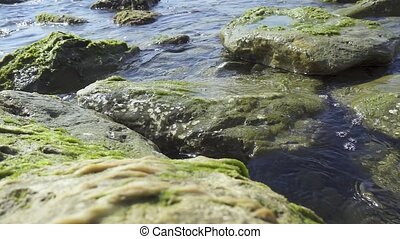 Large stones on the shore in seaweed slow motion - Large...