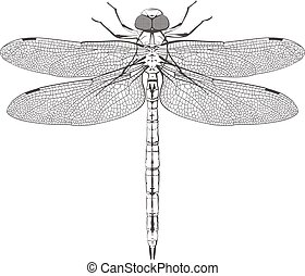 large symmetrical dragonfly - big post symmetrical dragonfly...