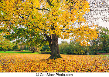 Large tree in a park in autumn