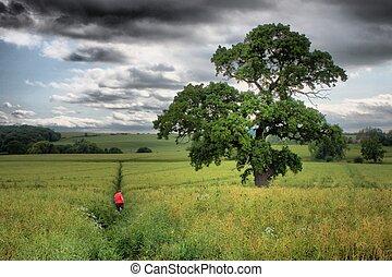 large tree in field under cloudy sky