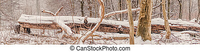 Large tree log covered with snow in the forest