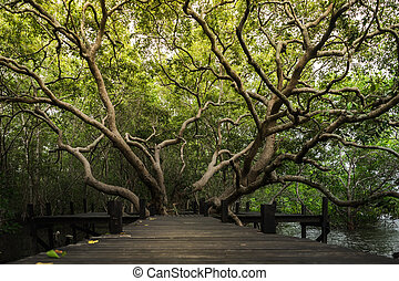 Large tree with exotic branches growing between wooden bridge.