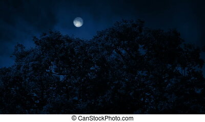 Large Tree With Moon Above - Big tree shakes in ther wind at...