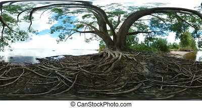 Large tree with roots next to a river