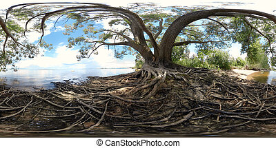 Large tree with roots