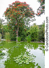large trees in a park, pond in the foreground