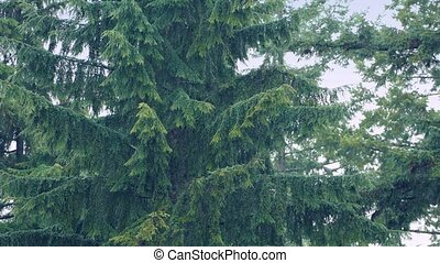 Large Trees In Heavy Rain