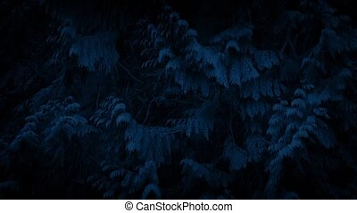 Large Trees Moving In Breeze At Night