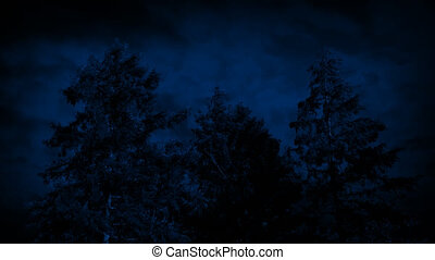 Large Trees Swaying On Stormy Night