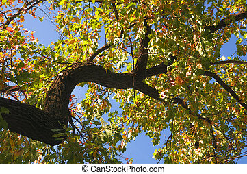 Large whimsical oak branch with yellow autumn leaves on blue sky background