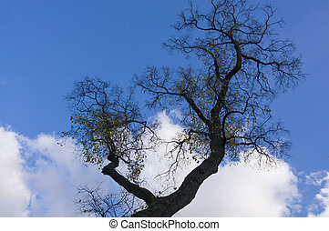 Large whimsical tree branch with yellow leaves against blue sky and white cloud background