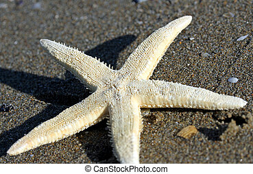 large white five-pointed starfish on the beach of the sea 1
