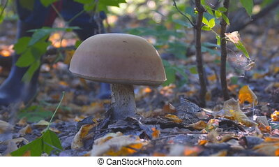 Large white mushroom in the autumn forest