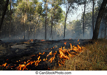 Large wildfire - KIRYAT GAT , ISR - APR 23:Large wildfire on...