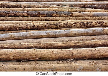 Large Wood Pile Of Old Fir Tree And Pine Logs Background Texture