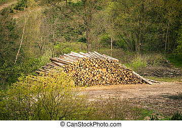 Large woodstack in a forest