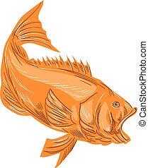 Largemouth Bass Diving Drawing