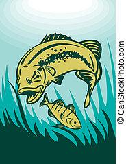 largemouth bass perch fish - illustration of a largemouth...