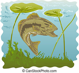 Largemouth bass swimming with water lilies - illustration of...