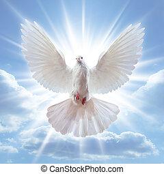 largo, ar, abertos, asas, pomba