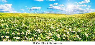 largo, shines, fiori, prato, sole